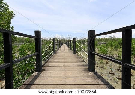 Wooden Bridge Lead To Mangrove Forest