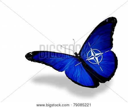 Nato Flag Butterfly Flying, Isolated On White Background