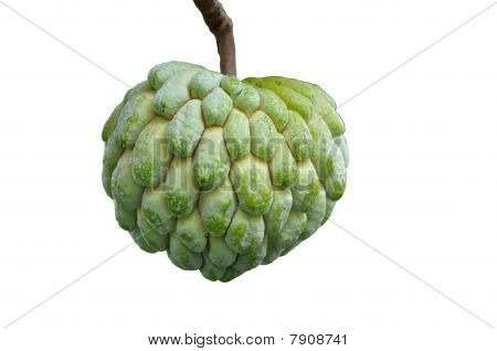 green custard apple in the urban gardens