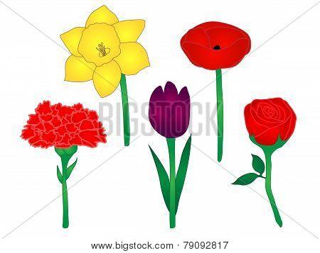 Common Flowers Illustration 1