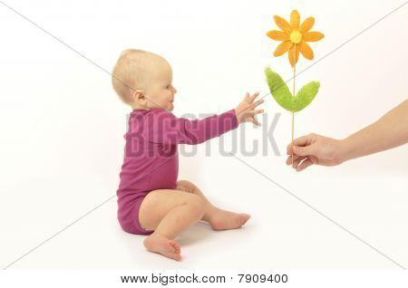 Hand verleiht Baby Blume