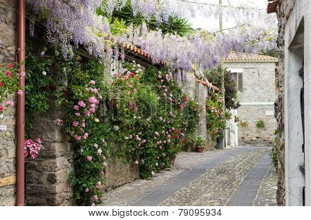 Narrow Street Of Flowers