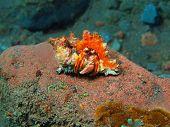 stock photo of hermit crab  - The surprising underwater world of the Bali basin - JPG