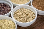 image of sorghum  - sorghum and other gluten free grains  - JPG