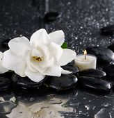 stock photo of gardenia  - Still life with white gardenia with candle with wet pebbles - JPG