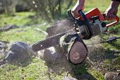 stock photo of man chainsaw  - Lumberjack worker cutting holm oak firewood with a chainsaw - JPG