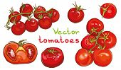 Постер, плакат: Vector Set Illustration Of Cherry Tomatoes And Tomatoes