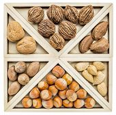 stock photo of pecan nut  - variety of nuts  - JPG