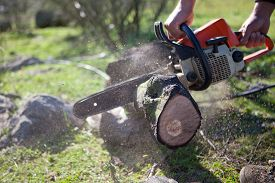 image of man chainsaw  - Lumberjack worker cutting holm oak firewood with a chainsaw - JPG