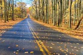 picture of twisty  - Asphalt road into autumn forest  - JPG