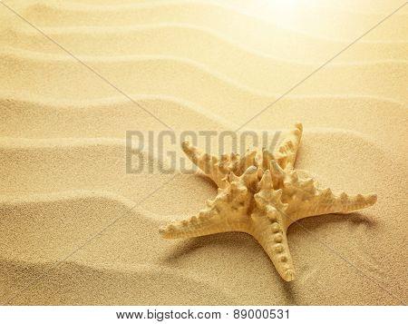 Starfish on a sunny sand ocean beach