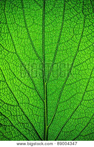 Fresh green leaf background, abstract natural backdrop, beautiful textured wallpaper, spring time season