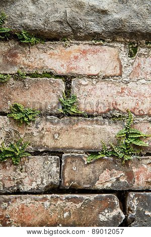 Stone Wall With Plants, Textured Background