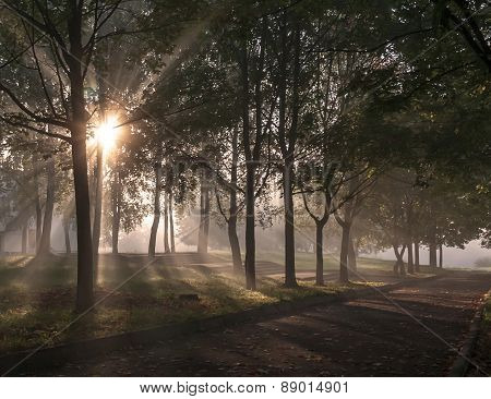 Misty alley in the park in the early morning