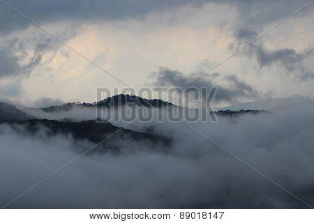 Munnar raja mala hills, Kerala, India