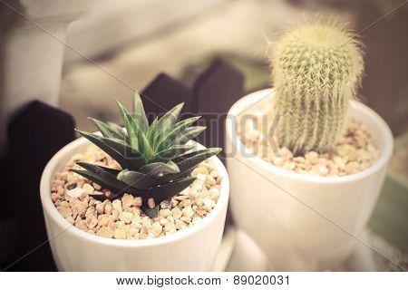 Small Cactus In A White Pot