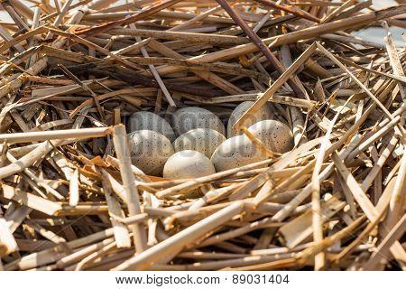 Bird's nest in natural habitat.