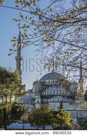 view of the Sultanahmet Mosque and flowering trees