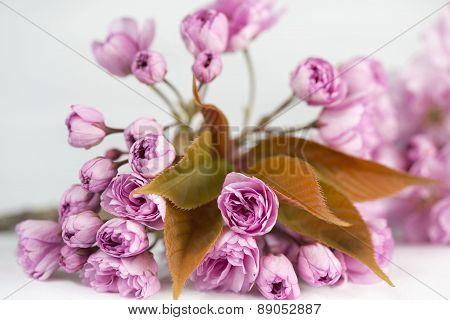 Spray Of Cherry Blossom Flowers