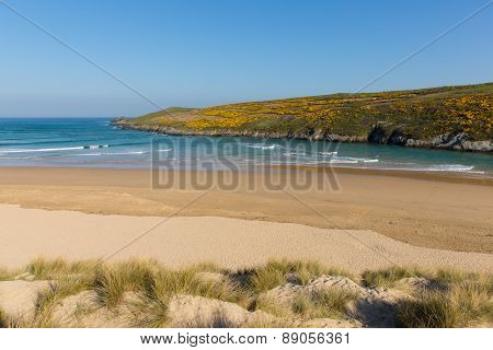 Crantock beach North Cornwall England UK near Newquay with yellow gorse