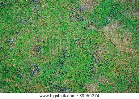 Green Grass With Soil For Background