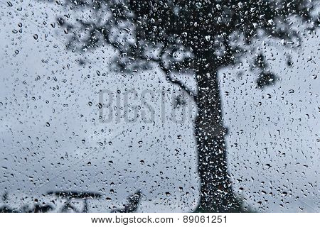 Raindrop And Big Tree