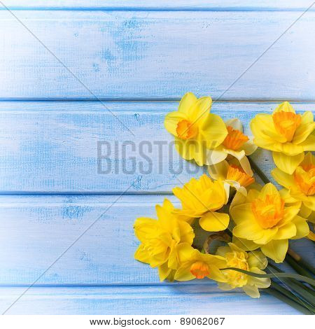 Background With Fresh Narcissus