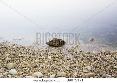 Large Stone In A Dim Foggy Water
