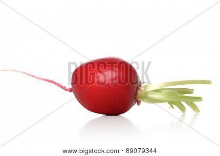 Studio shot of radish on white background