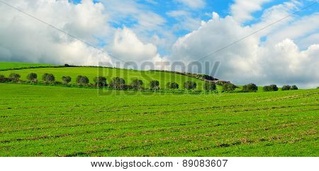 Trees Row In A Green Field