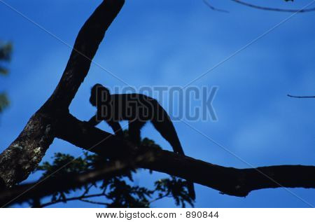 Blue Monkey Silhouette