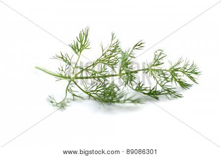 Close up of dill on white background