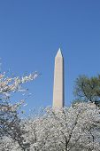 picture of obelisk  - The Washington Memorial was built to commemorate George Washington (The first USA president) and it is the biggest obelisk and the world largest stone structure. ** Note: Visible grain at 100%, best at smaller sizes - JPG