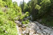 image of ravines  - The Homole Ravine in Pieniny mountains Poland - JPG