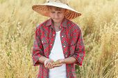 pic of oats  - Portrait of young farmer is checking oat or Avena sativa seeds in cupped palms at ripe field - JPG