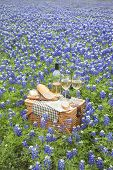 stock photo of bluebonnets  - A brown wicker picnic basket with wine cheese bread and utensils in a field of Texas Hill Country bluebonnets - JPG