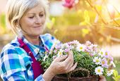 image of beautiful senior woman  - Beautiful senior woman planting flowers in her garden - JPG