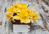 pic of daffodils  - Yellow daffodils in basket with empty tag on a old wooden background - JPG