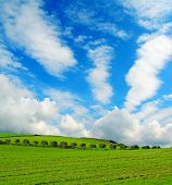 stock photo of row trees  - trees row in a green field under clouds - JPG