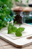 foto of oregano  - Close up of oregano on desk - JPG