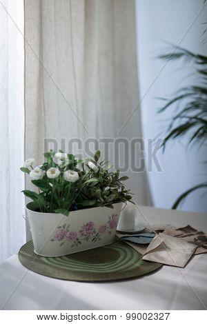 Daisies In Flower Pot