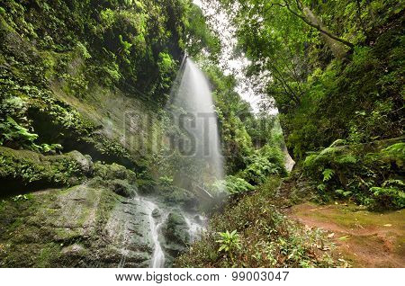 Los Tilos waterfall and Laurisilva forest in La Palma Canary Islands Spain.