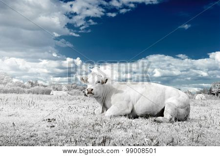Landscape With Cow In White And Blue Tone