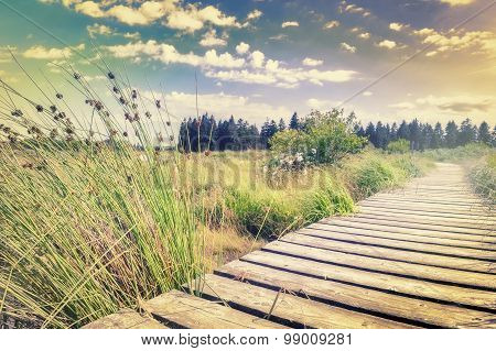 Summer Landscape With Wooden Plank Board Walkway