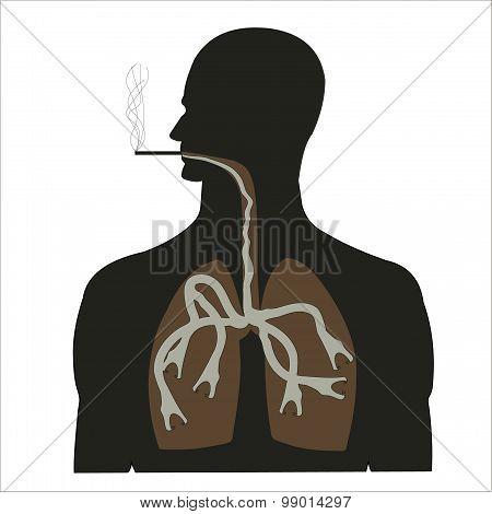 Smoking Is Harmful To Health