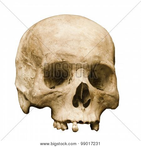 Human Skull Set Against A White Background