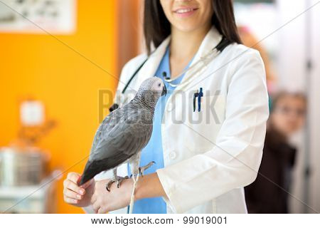 Young vet doctor with sick parrot in the clinic