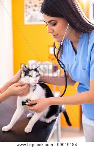 Beautiful veterinarian listening cat's breathing at her vet ambulant