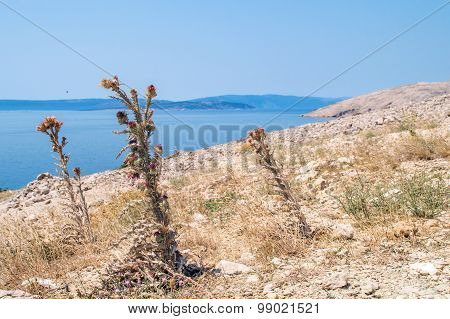 Rocky Coastline Hill With Desert Dry Flowers And Clear Blue Sea On A Summer Day