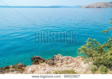 Rocky Coastline With Bushes And An Olive Tree By The Adriatic Sea